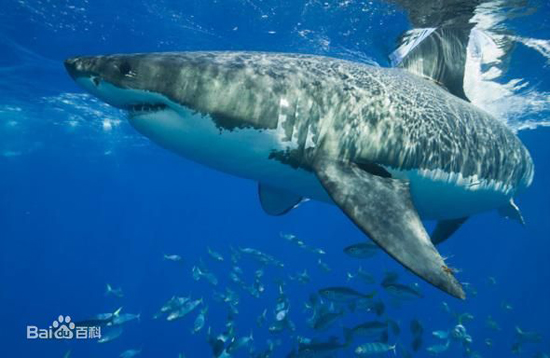 Shark, one of the 'top 10 deadliest animals in the world' by China.org.cn.