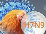 New H7N9 cases reported in Hangzhou, Hong Kong