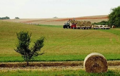 An increasing number of Chinese enterprises have gone to farm abroad due to challenges in China's grain production. [inewsweek.cn]