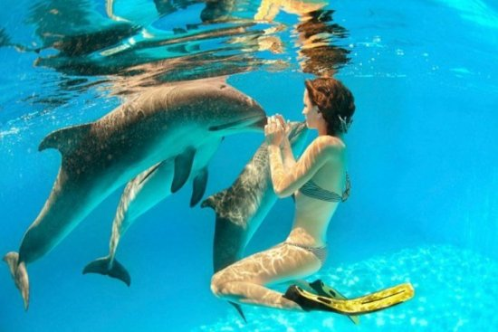 The intimate life of dolphins and humans, one of the 'top 10 craziest animal experiments' by china.org.cn.