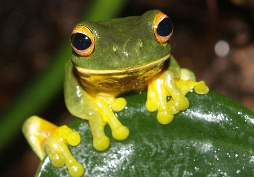 Frog, one of the 'top 10 animals with incredible vision' by China.org.cn.