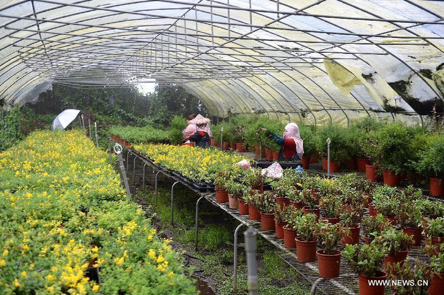 CingJing Farm accommodation  Taiwan Forum  TripAdvisor