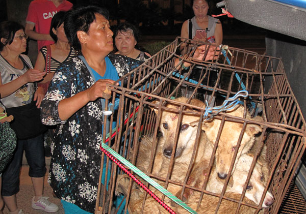 Yang Xiaoyun, founder of The Home To All, an animal shelter in Tianjin, fixes a cage carrying dogs in Yulin on Thursday. Yang and other volunteers stopped a tricycle carrying dogs to be eaten and saved them. [Photo/China Daily]