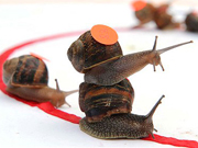 2014 World Snail Racing Championship