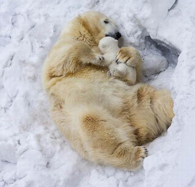 温暖治愈!动物世界里的亲情百态