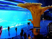 Hengqin island boasts the world's largest aquarium