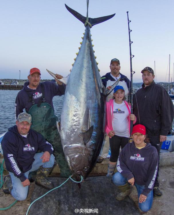 Record setting tuna caught by 12 year old girl for Giant tuna fish