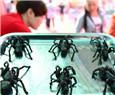 Food shortage? Eat bugs!
