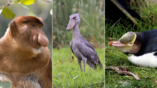 Top 10 most endangered animal species in the world - China ...