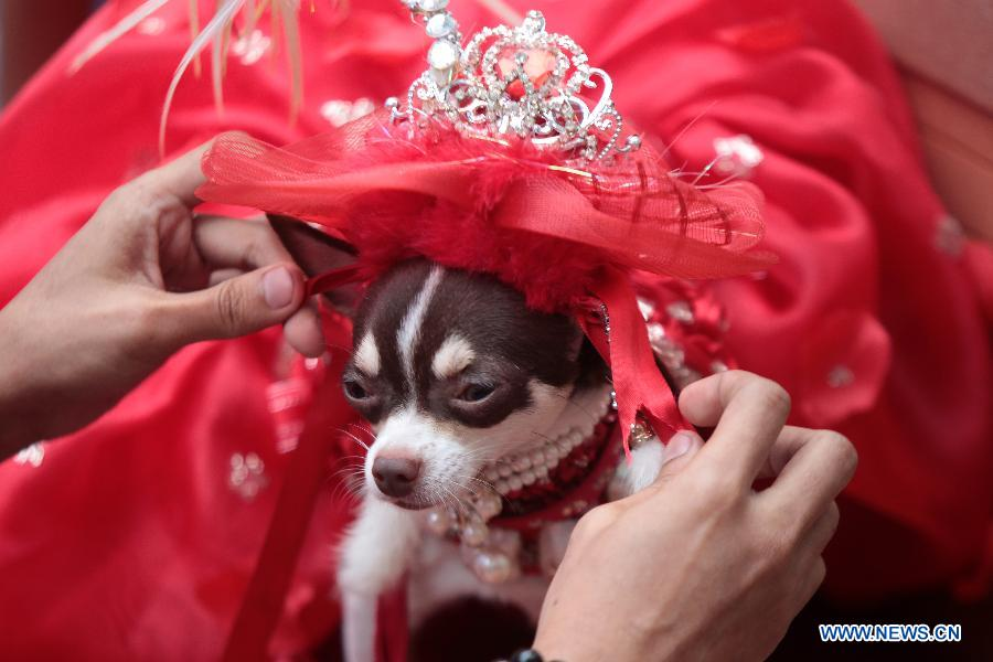 Dogs wear colorful gowns for costume contest- China.org.cn