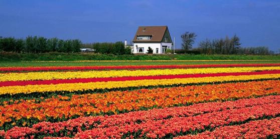Top 10 spring flowers to see in Beijing