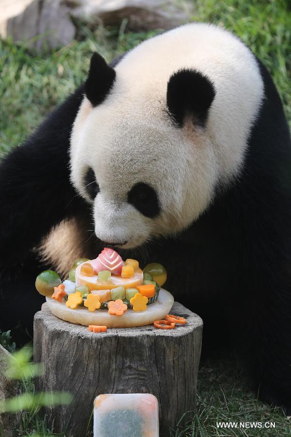 Panda Xinxin Celebrates Birthday At Macaos Park China