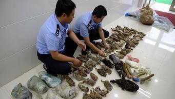 Smuggled wild animal products seized in NE China