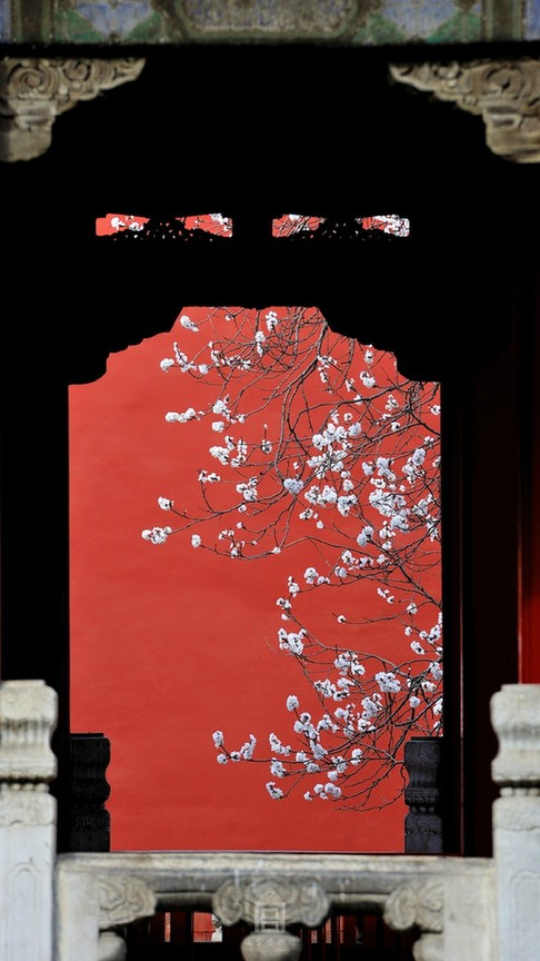 Apricot Flowers In Forbidden City Chinaorgcn