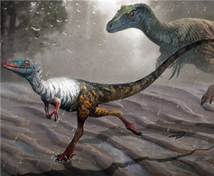Fossil footprints bring dinosaurs to life