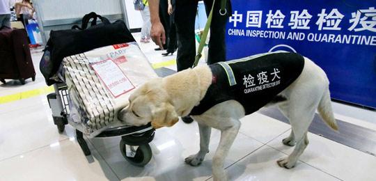 连云港口岸首次迎来检疫犬现场巡检