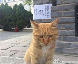 Museum's decision to keep cats gets Weibo users purring support
