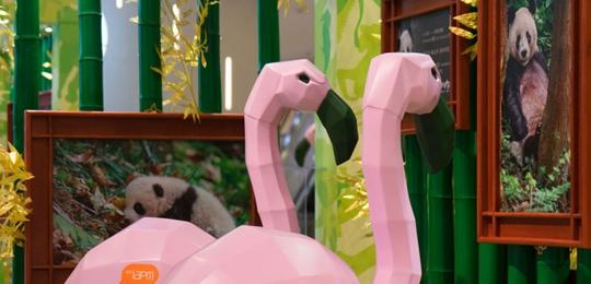 """《我们诞生在中国》热映 上海举办""""夏日动物王国""""主题展"""