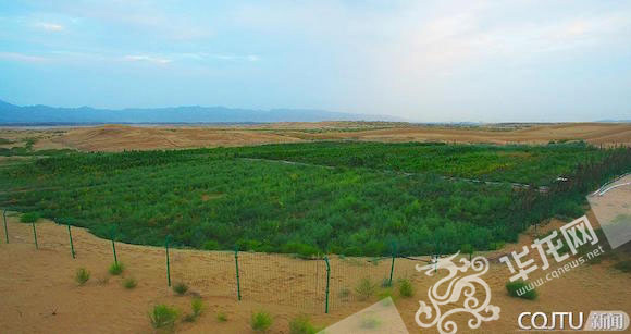 A 1.6-hectare sandy plot in Ulan Buh Desert in Inner Mongolia Autonomous Region,north China, has been transformed into fertile land. [Photo/www.cqnews.net]