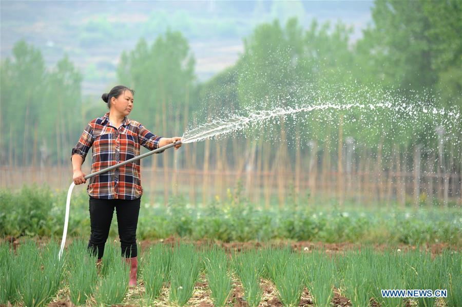 CHINA-GUIZHOU-GUYU-AGRICULTURE (CN)