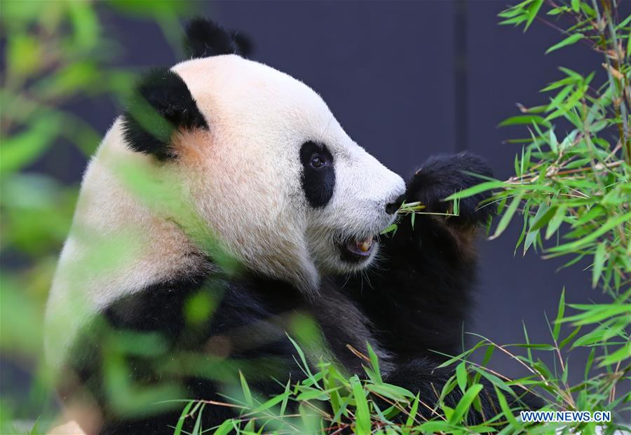 Image result for panda dutch zoo