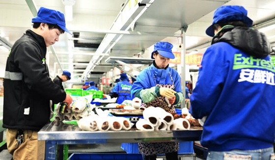 Employees of Yiguo.com package fruit in Shanghai. [Photo/China Daily]