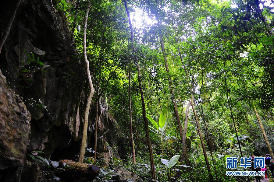 The primeval forest in Xishuangbanna, Yunnan Province. [File photo: Xinhua]