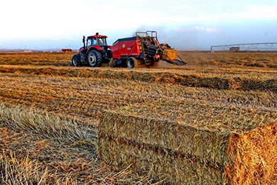 Five years on: China's agricultural achievements