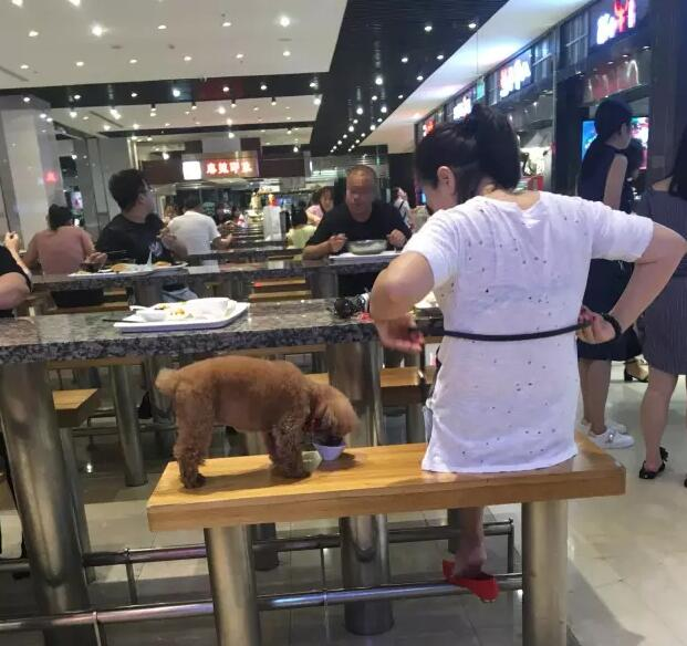 New Town Plaza Food Court In Hong Kong: Outrage As Dog Dines In Restaurant- China.org.cn