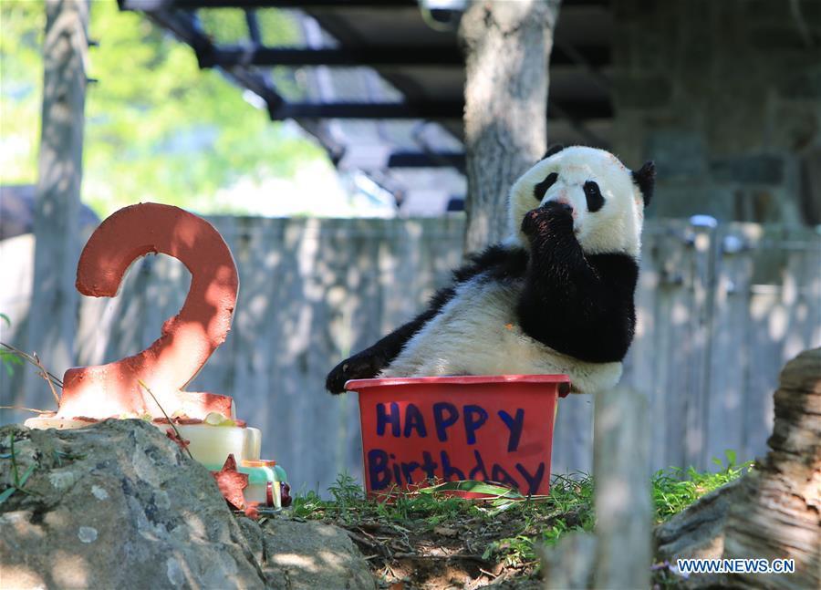 U.S.-WASHINGTON D.C.-GIANT PANDA-BIRTHDAY CELEBRATION