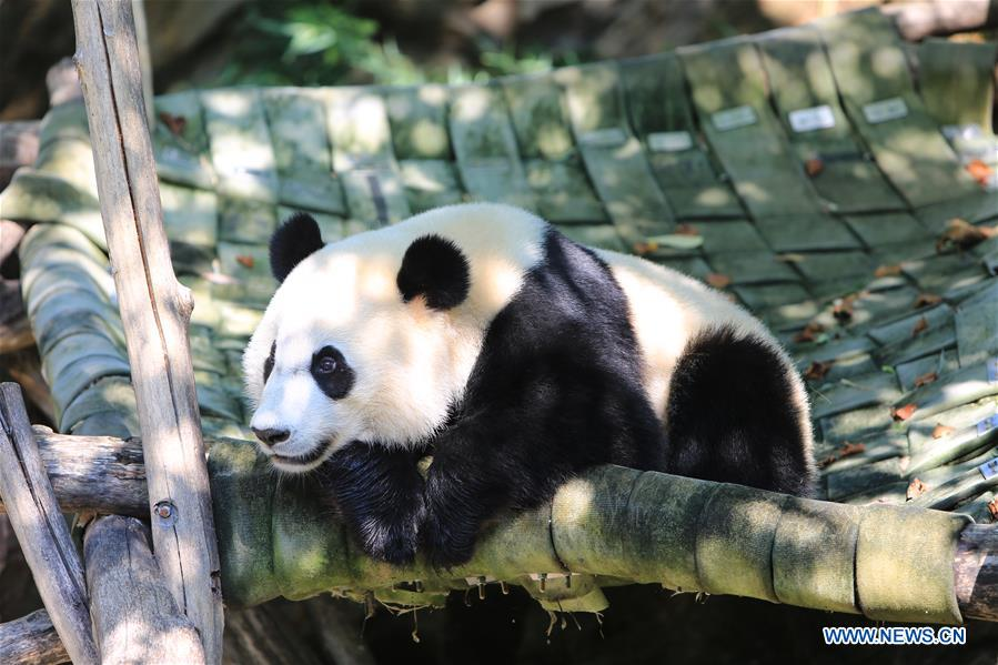 U.S.-WASHINGTON D.C.-GIANT PANDA-BIRTHDAY CELEBRATION