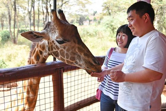 Two Chinese tourists feed a giraffe in Nairobi, Kenya, Feb 2, 2017. [Photo/Xinhua]