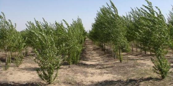 Ordos Narisha Desert adopts various measures in ecological restoration