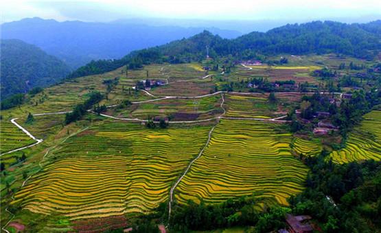 重庆石柱:五大路径夯实可持续脱贫基础