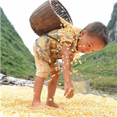Over 3 mln people pulled out of poverty in past 4 years in Guangxi