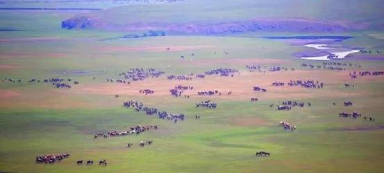 呼伦贝尔草原最美的季节,与骏马相会