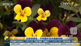 第一时间:世园会千种国外花卉提前亮相