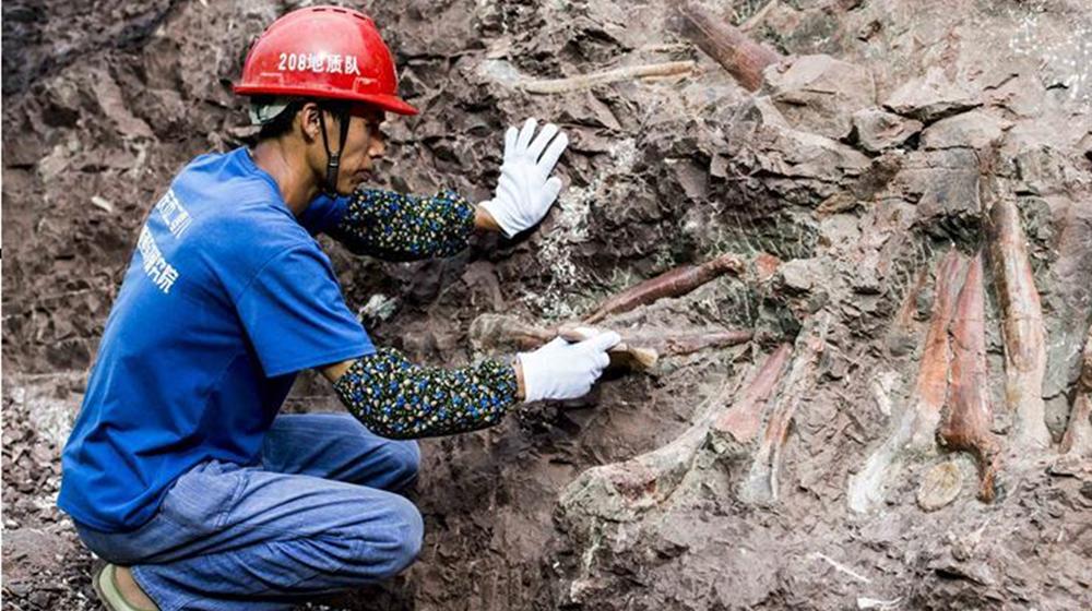 重慶雲陽發現世界級恐龍化石群
