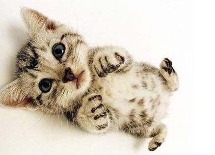 淘气可爱的小猫照片