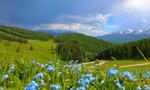新疆哈巴河县那仁夏牧场美如仙境让人流连忘返