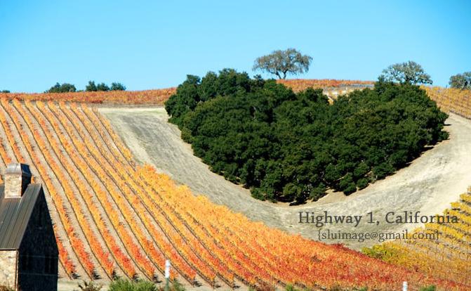 Красивые пейзажи вдоль автодороги номер 1 в штате Калифорния США1