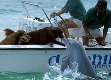 Fotos que muestran amistad increíbles entre los animales