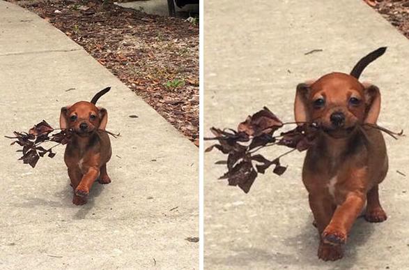 Imágenes más felices de los perros que te harán sonreir