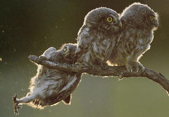 Fotos cómicas de los animales silvestres