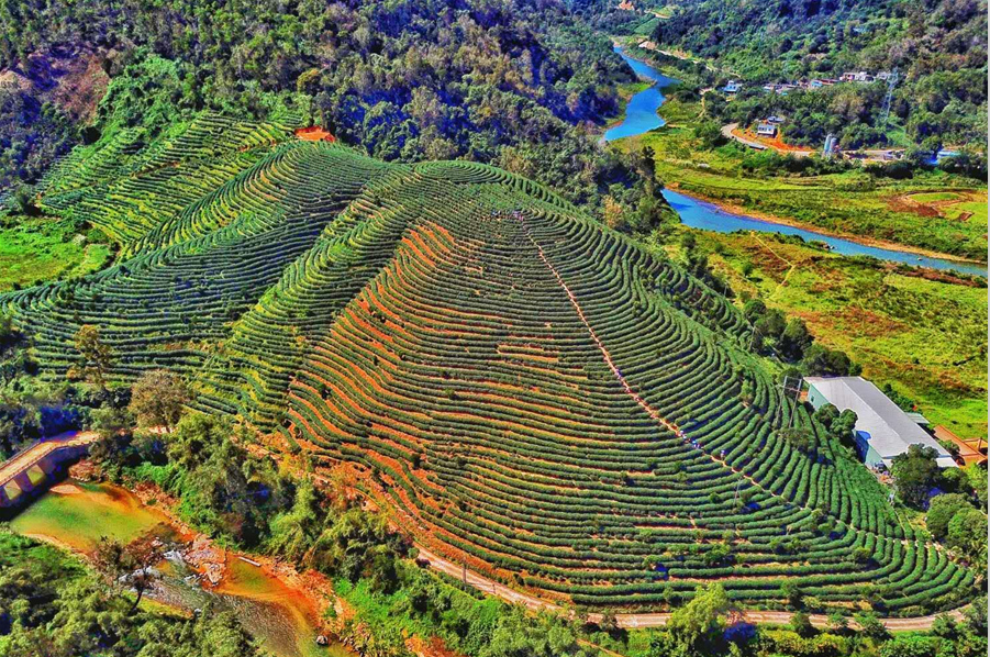 Yexian Organic Tea Garden constitutes the beautiful scenery of the Shuiman Town of Wuzhishan City in China's Hainan Province. [Photo by ZengJie/hinews.cn]