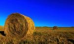 2020年草原禁牧拟控制在4.8亿亩 休牧面积19亿亩