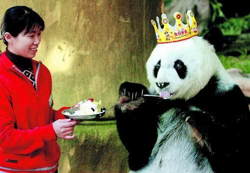 Happy Birthday Dear Panda