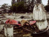 2004年印尼海啸李连杰