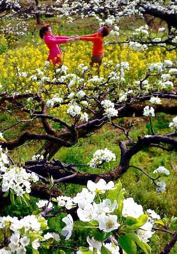 الورود.. والزهور ------ دلالات ومعاني 283825.jpg