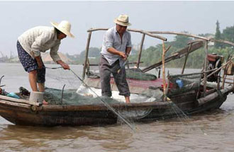 Pollution Over Fishing Driving Yangtze Species To